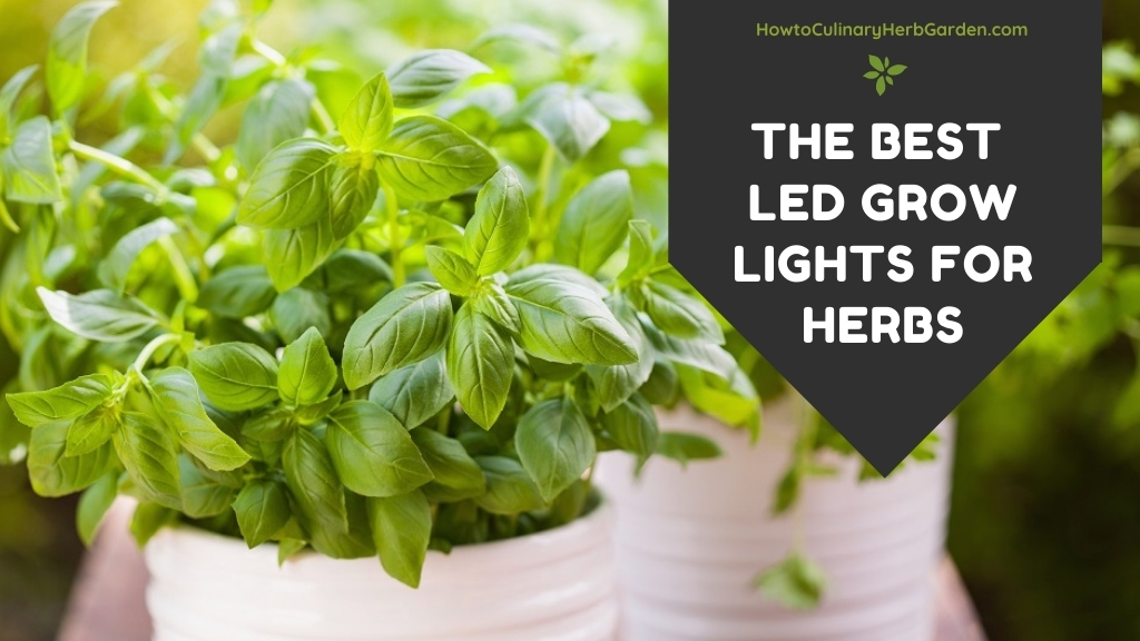 The Best LED Grow Lights for Herbs