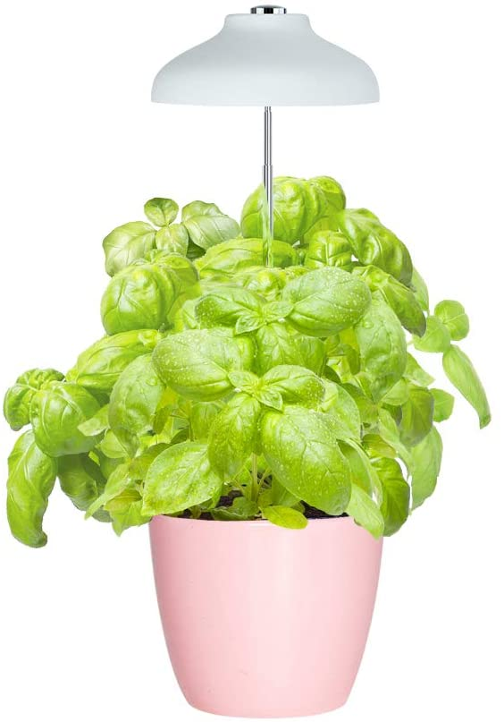 GrowLED Umbrella Light shown with a basil plant