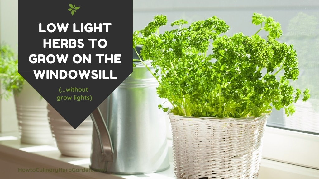 Low light herbs to grow on the windowsell without grow lights