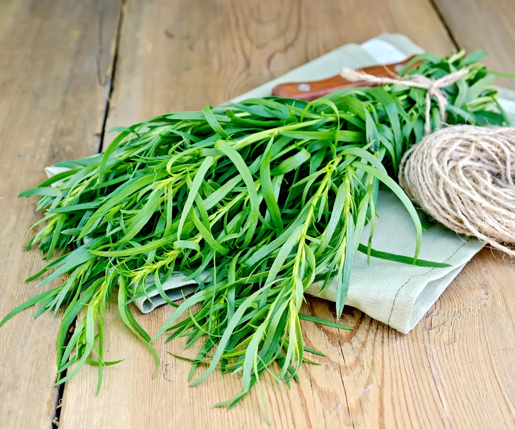 fresh tarragon on the cutting board wrapped in twine