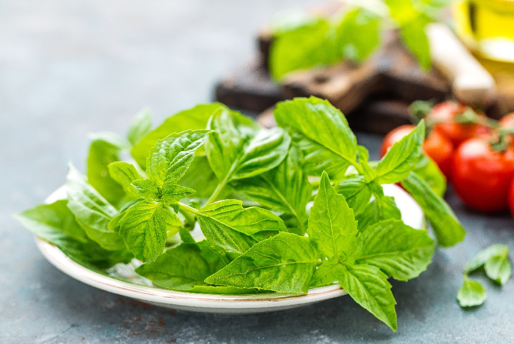 fresh basil leaves on a white plate