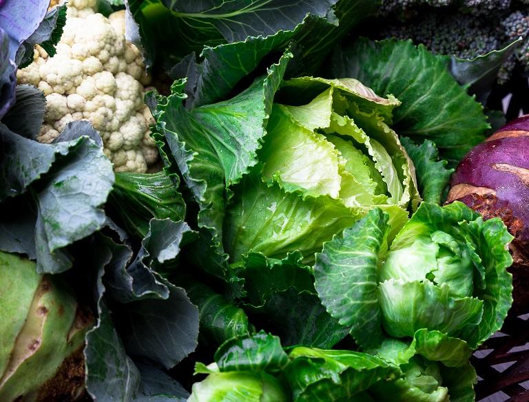 cabbage broccoli and cauliflower are good companion plants for cilantro