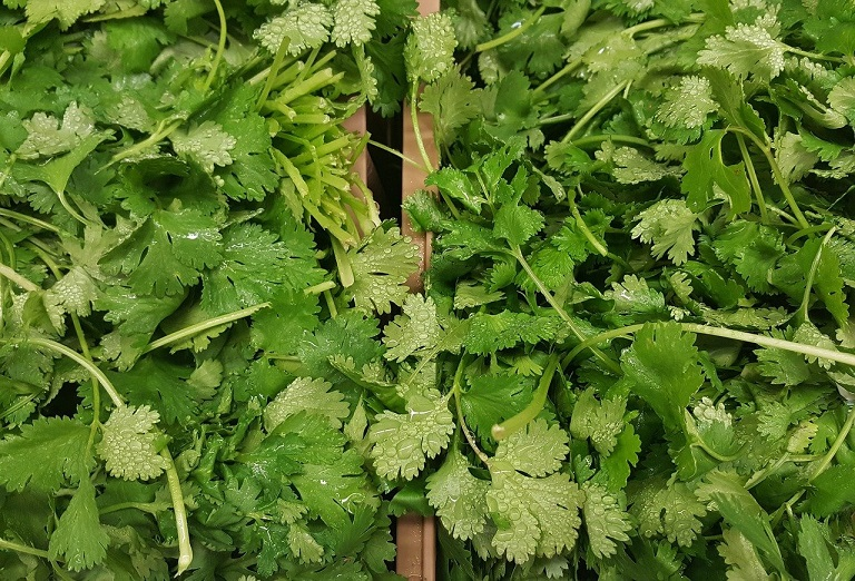 cut coriander stems