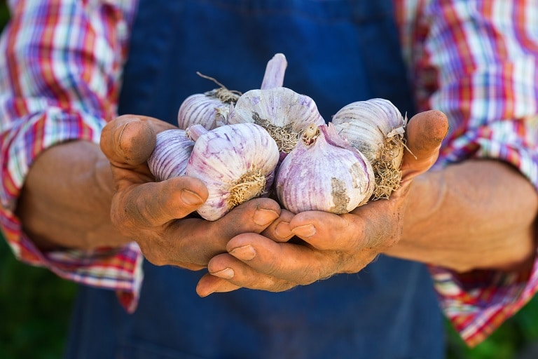 man holding garlic he grew in the garden to share with friends