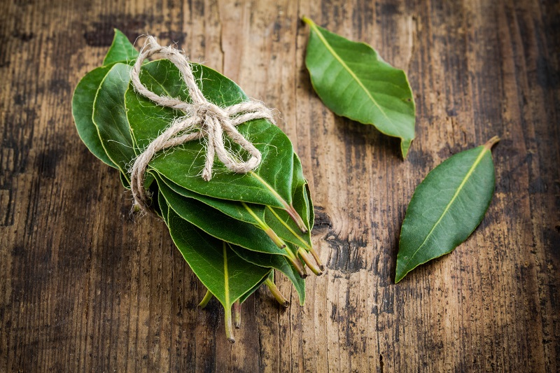 bundle of bay leaves prepared for drying