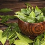 freshly harvested bay leaves in a wooden bowl on a table