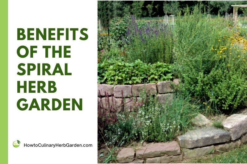 benefits of the spiral herb garden - title image with photo of an herb spiral to the right