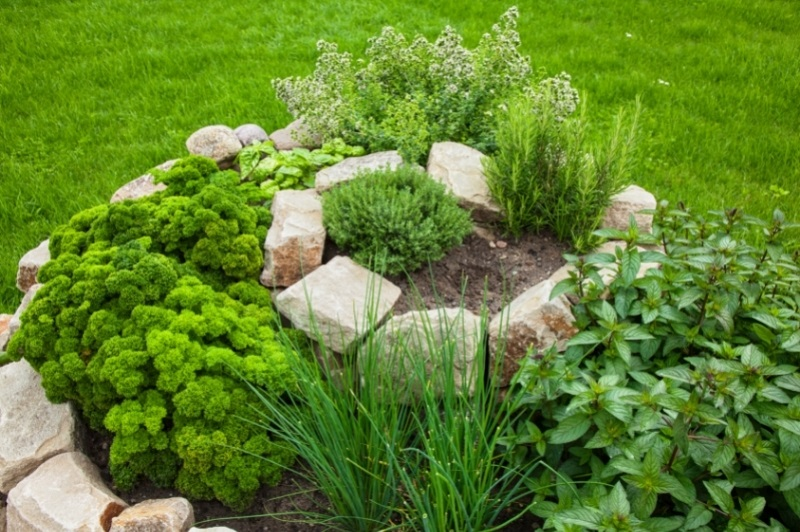 mature herb spiral with large rocks as the structure - parsley, chives, mint, rosemary and thyme grow inside