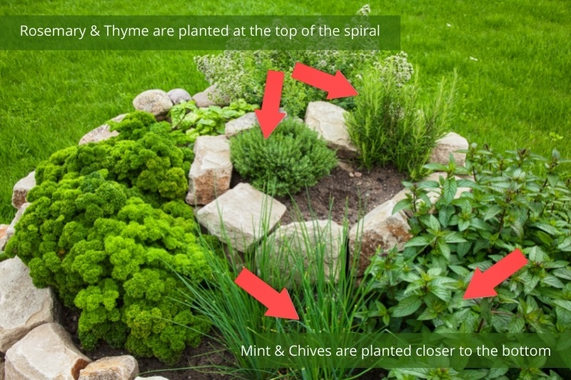 image showing where the plants should be positioned in the spiral herb garden - mint and chives at the bottom with rosemary and thyme on top