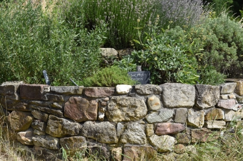 herbs growing in a spiral design with a taller stone wall as a border