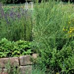 mature spiral herb garden with strawberries lavender, chives and other full grown blooming herbs