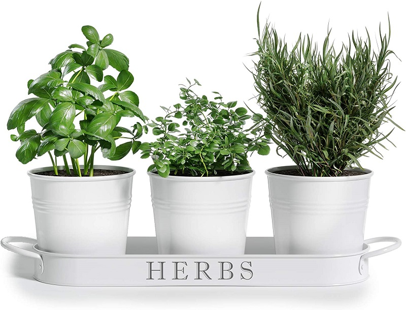 Three white herb pots with drainage tray
