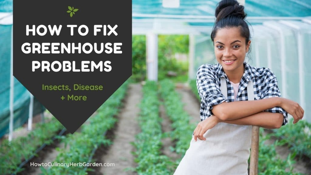 How to fix greenhouse problems - disease, pests - image of happy woman and healthy greenhouse plants