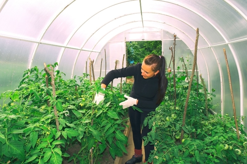 woman tending to plants in the greenhouse